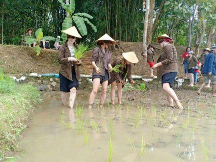 paket wisata manado tanam padi